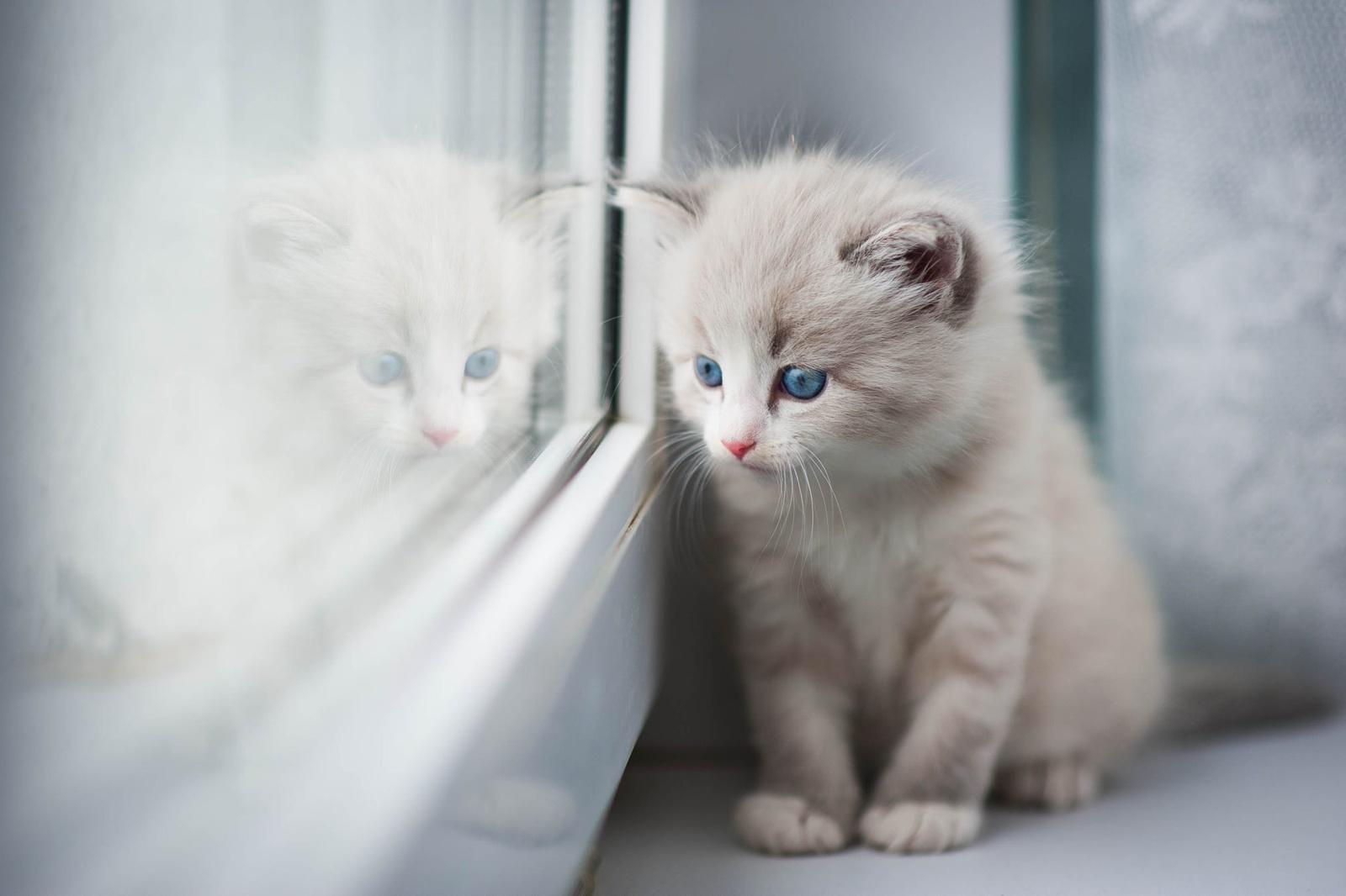 Когтёнок - все для вашего котенка