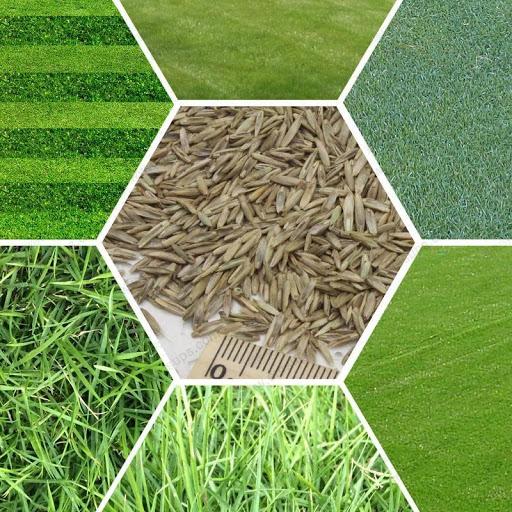 Большой выбор семян газонной травы